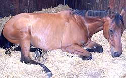 Horses can get different types of colic