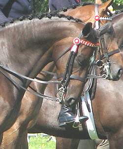 Riding horses shown in double bridles
