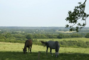 horse livery and grazing West Hoathly